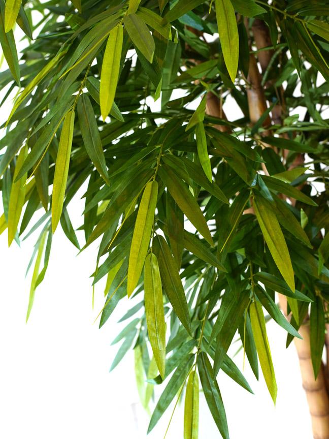 New Bamboo Buddha Tree Online