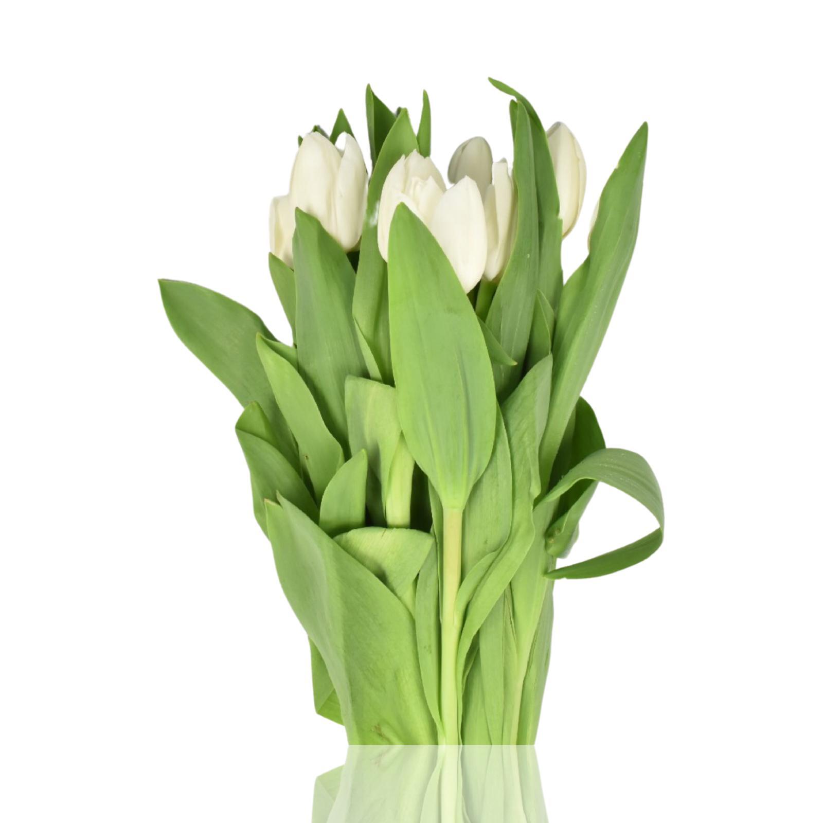 Tulip Pure White 'Wholesale Flowers Cut Flowers