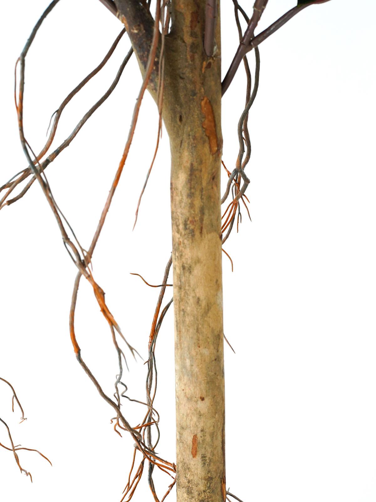 شجرة المطاط - كبير Shopping