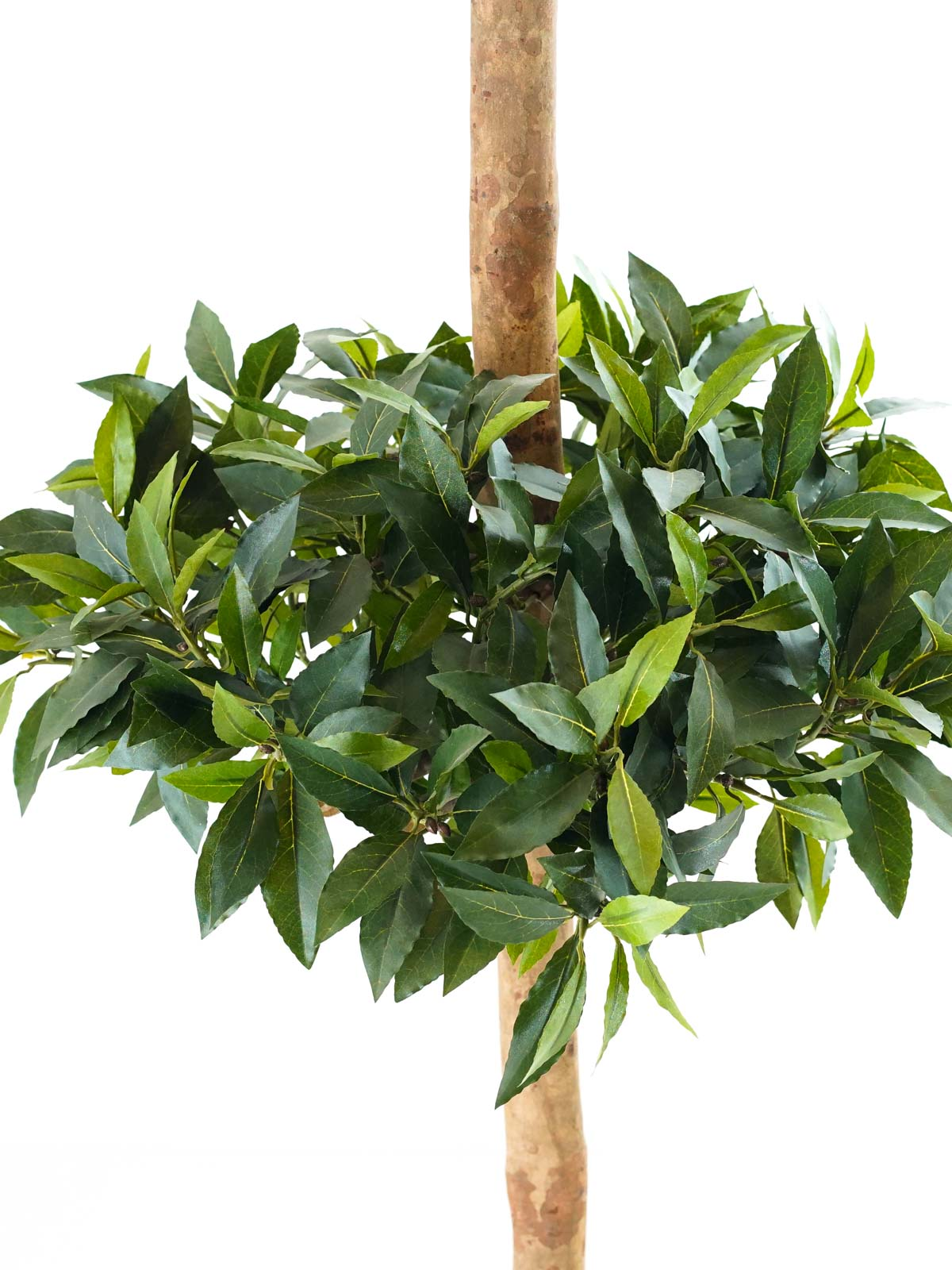 شجرة سويت باي بول - كبير Shopping