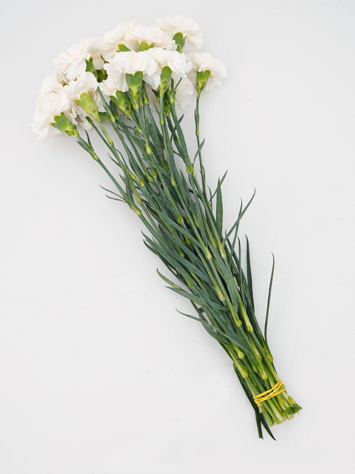Carnation White Shopping