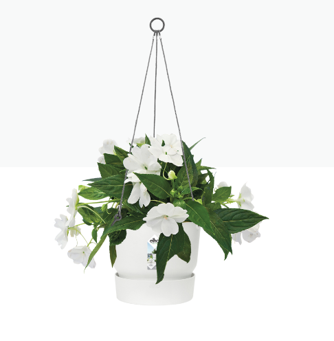 Greenville Hanging Basket 24cm White Shopping