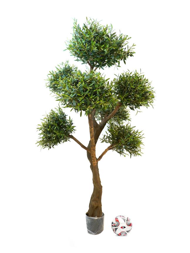 G-Olive Tree Shopping
