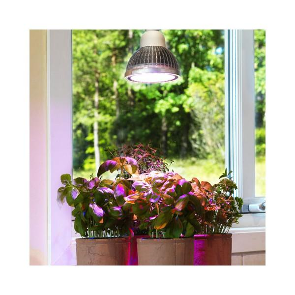 Day Light LED SOL Series PGL-E18 Hydroponic System