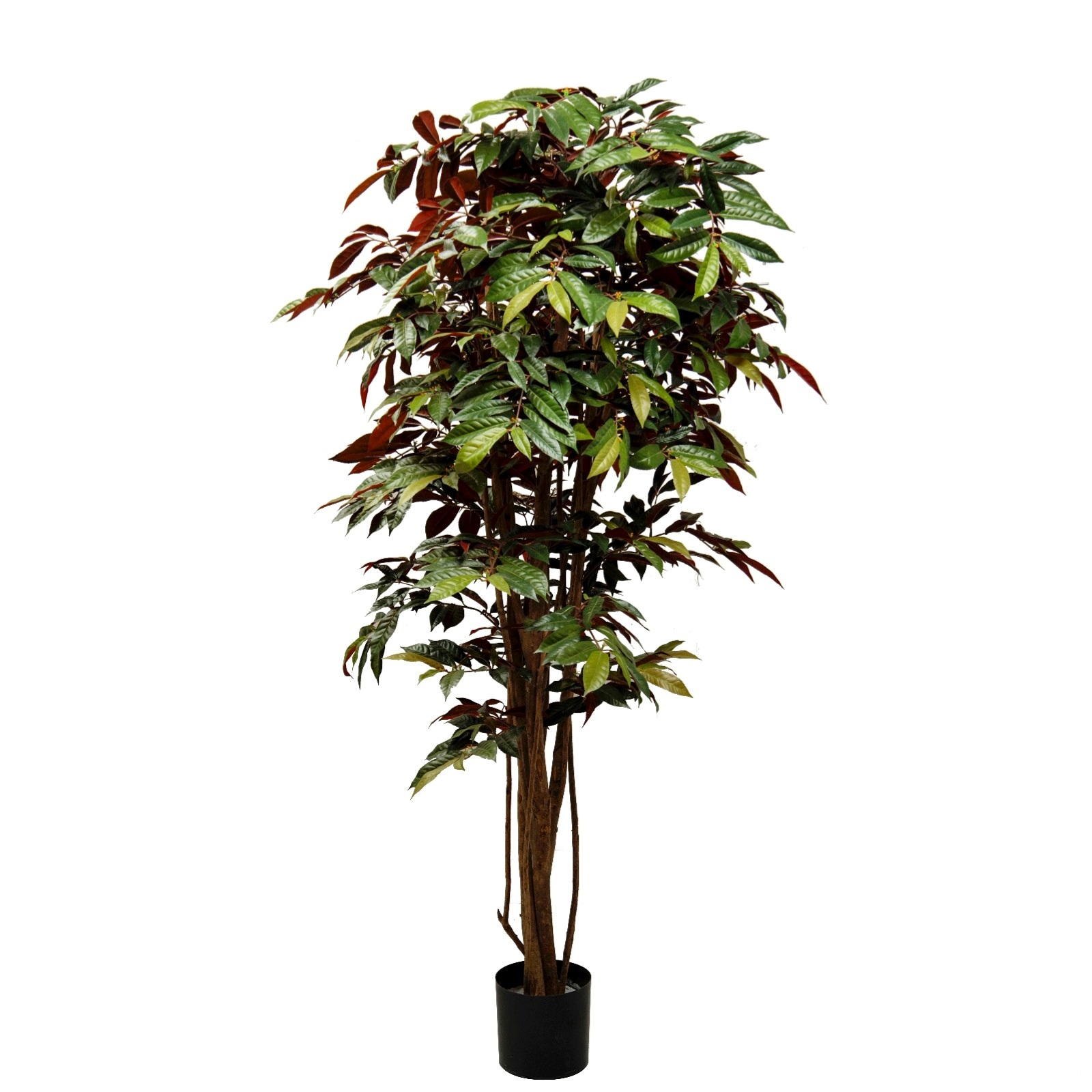 Nice Capensia Tree Small Artificial Plants