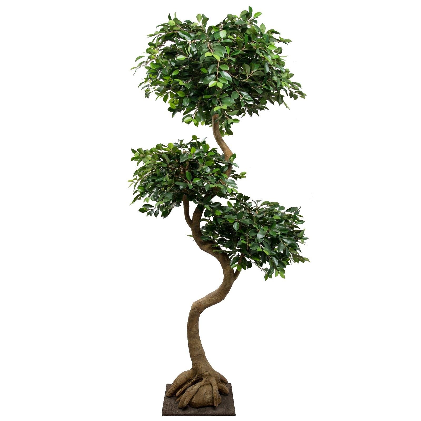 فايكس ريتيوسا نباتات اصطناعية