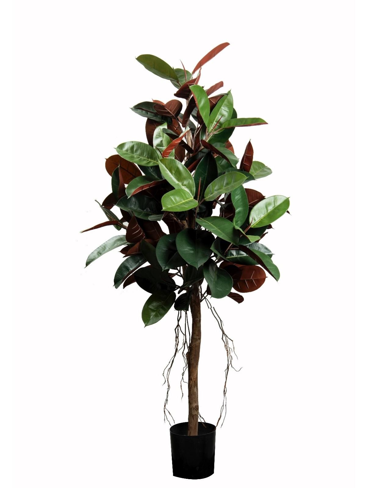 شجرة المطاط - كبير نباتات اصطناعية