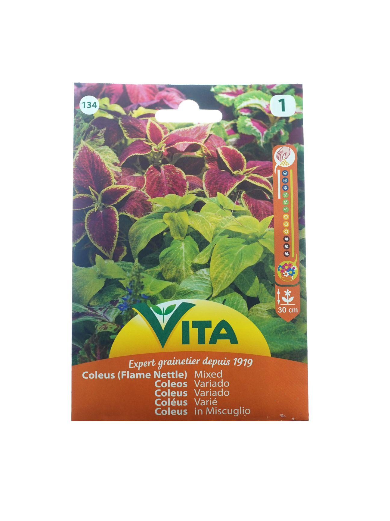 Vita Coleus (Flame Nettle) Mixed Seeds