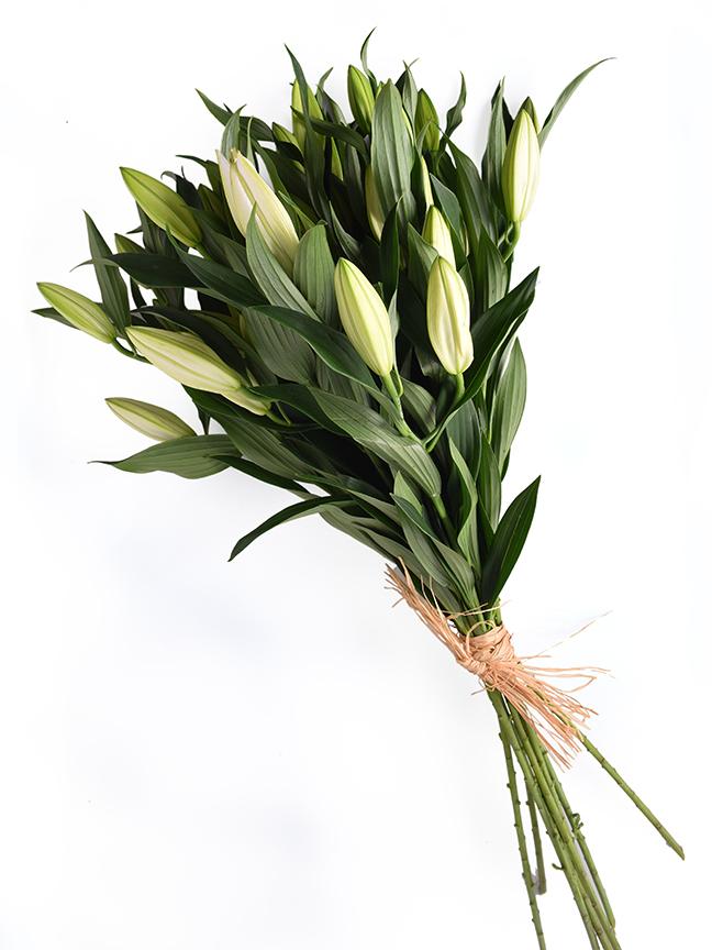 Lillium Casablanca Wholesale Flowers