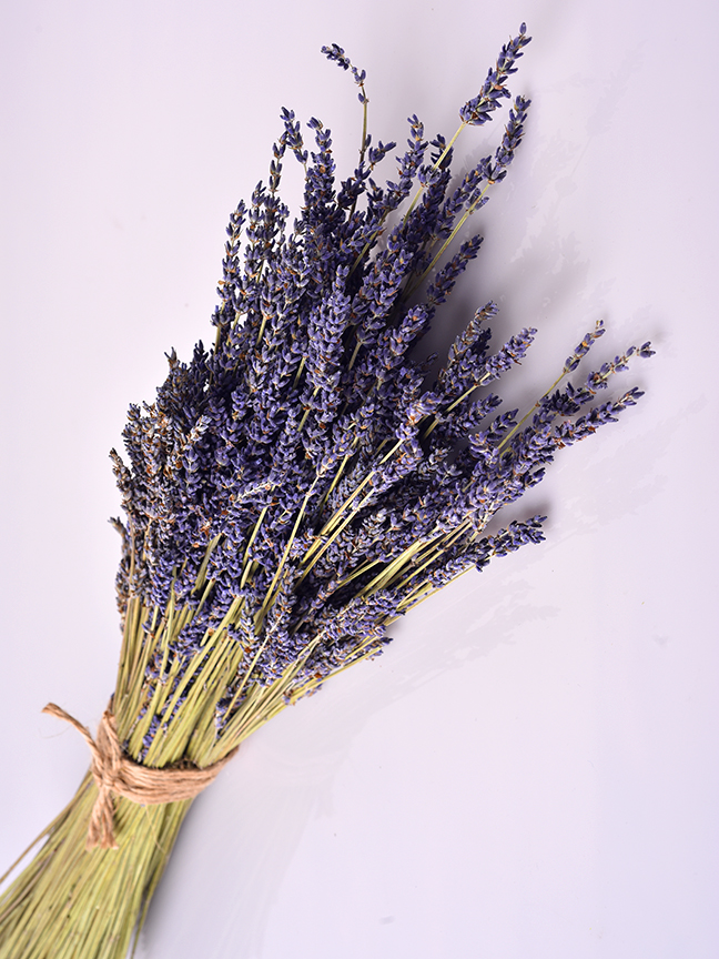 Lavender 'Wholesale Flowers'