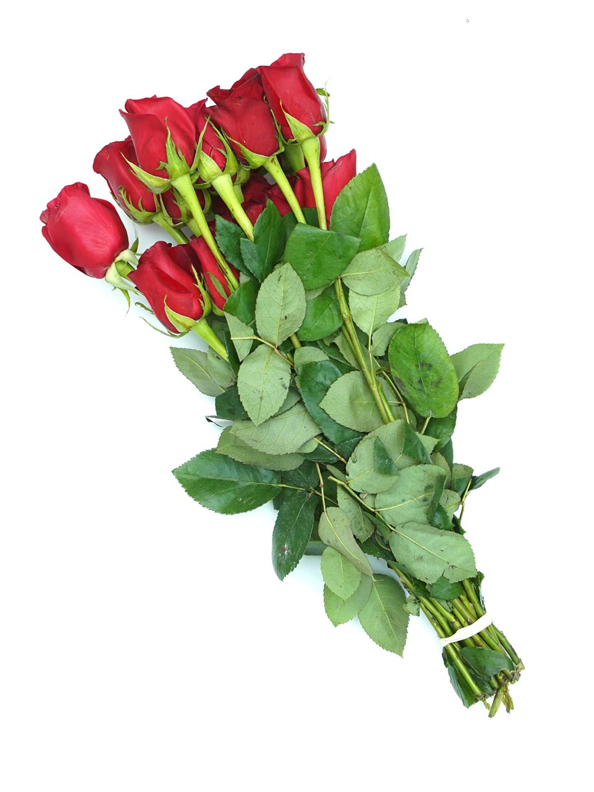 Roses Freedom Red Wholesale Flowers
