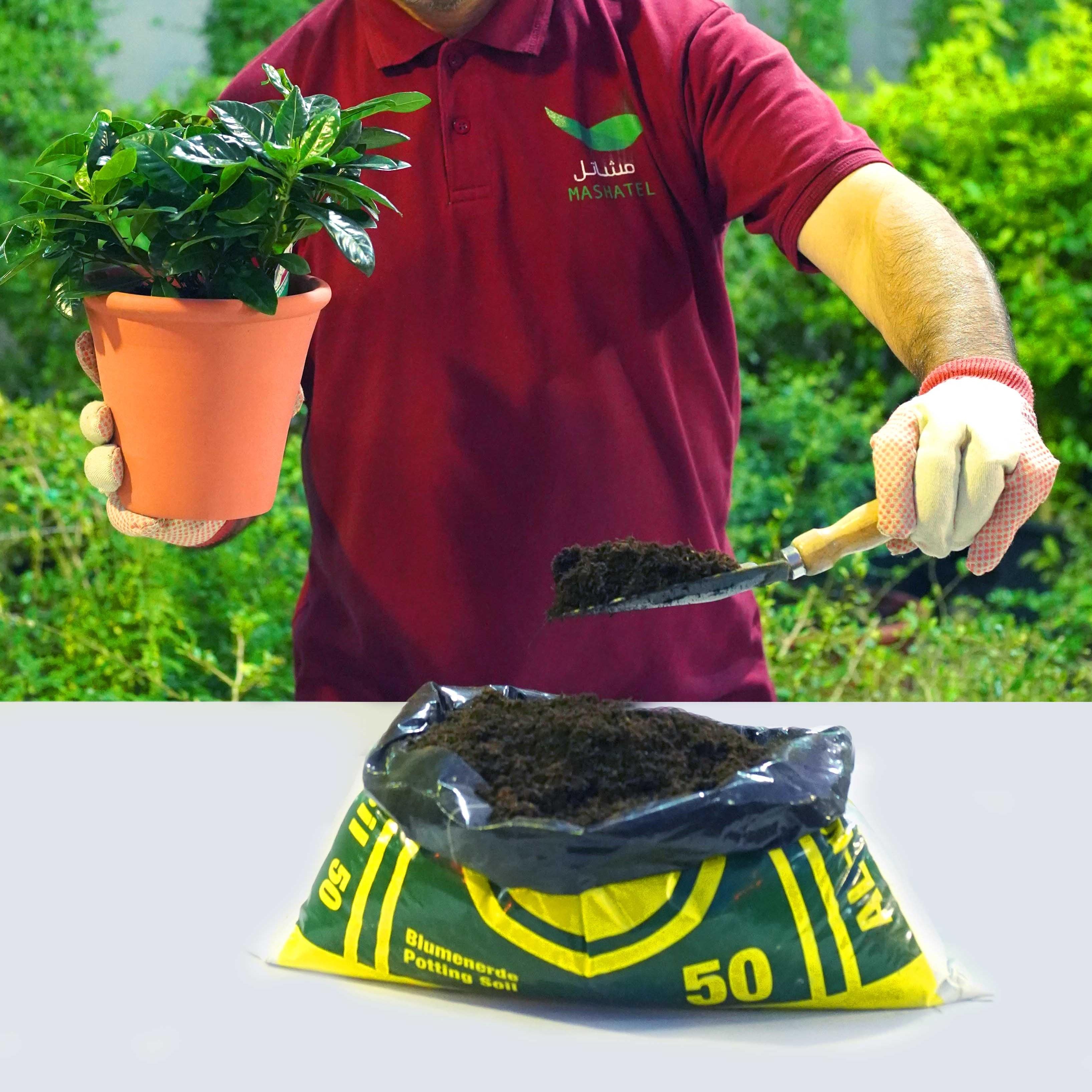 هل تريد زراعتها في إناء؟ 'service product'