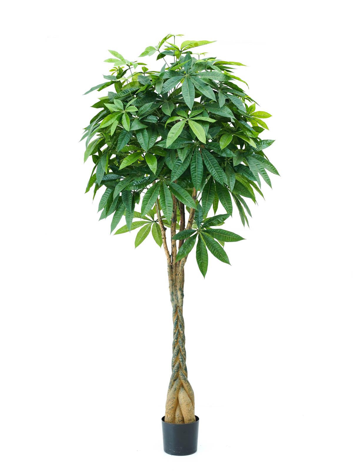 Pachira Braid Tree Large 'Artificial Plants'