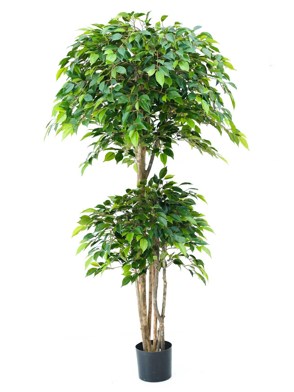 شجرة تين نتاشا ترولبيكال - وسط نباتات اصطناعية