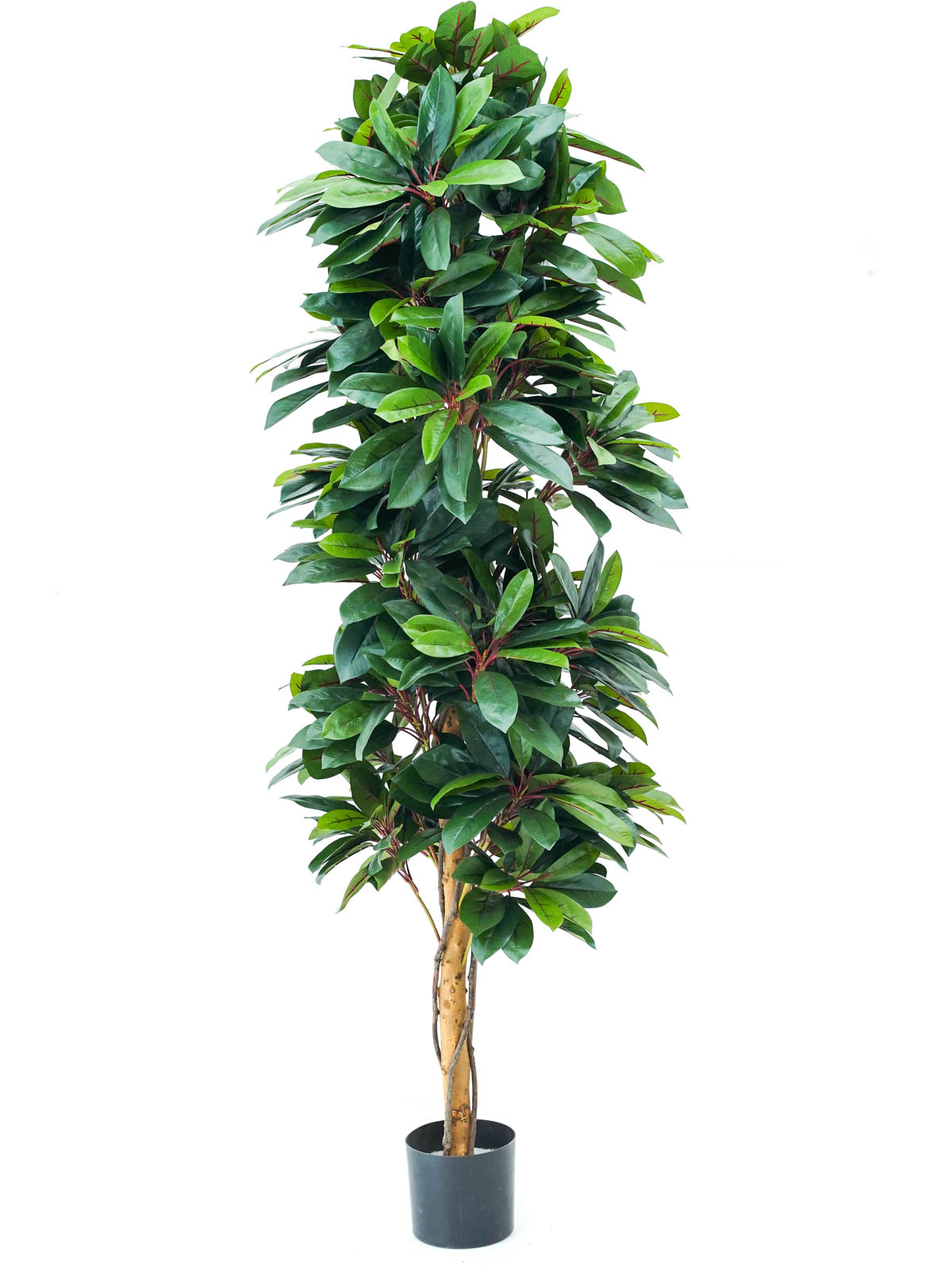 Red Lady Schefflera Natural Tree Large Artificial Plants