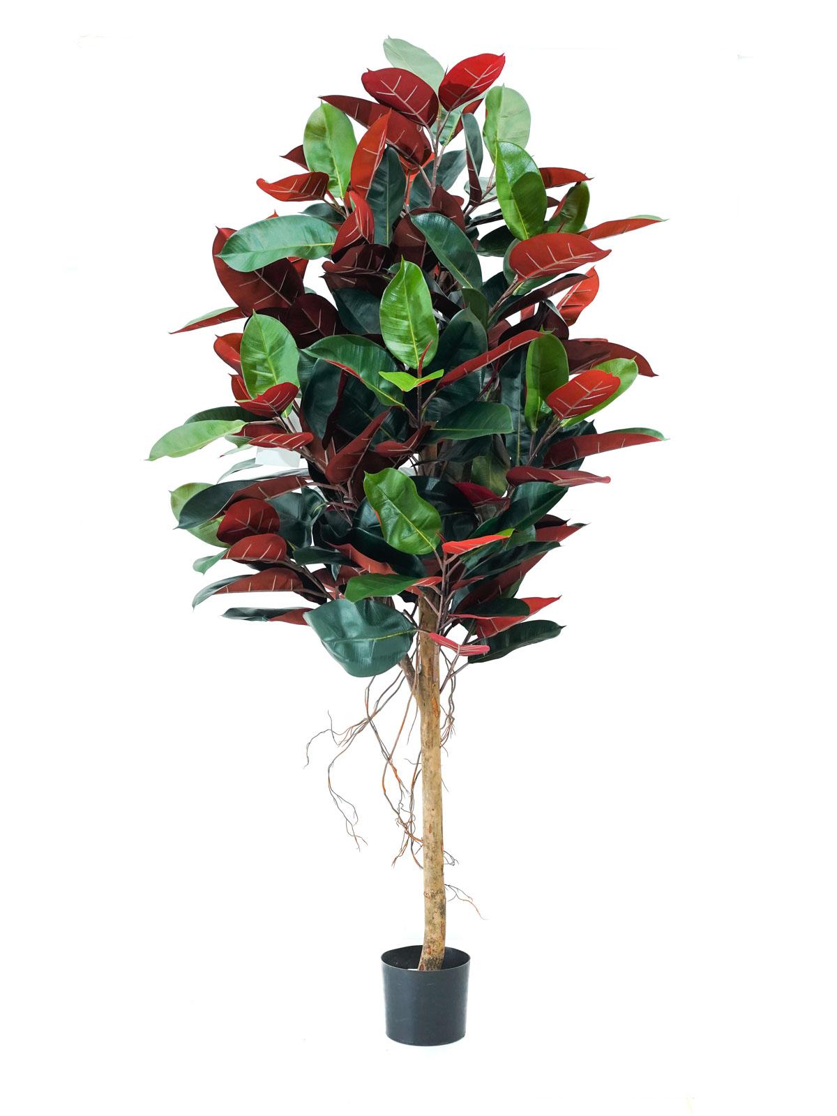 شجرة المطاط - وسط نباتات اصطناعية