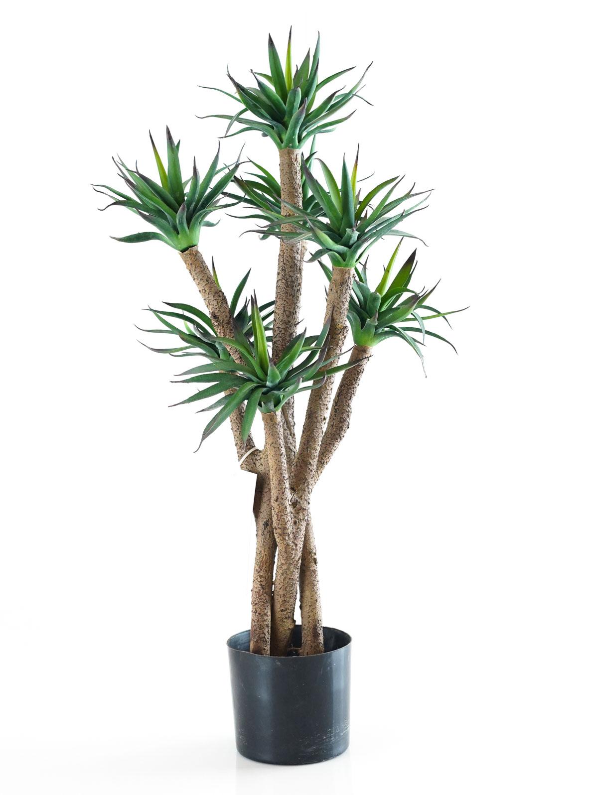 شجرة أغافا - وسط 'نباتات اصطناعية'