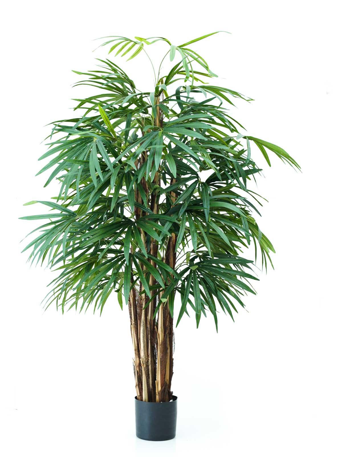 شجرة بامبو - كبير نباتات اصطناعية
