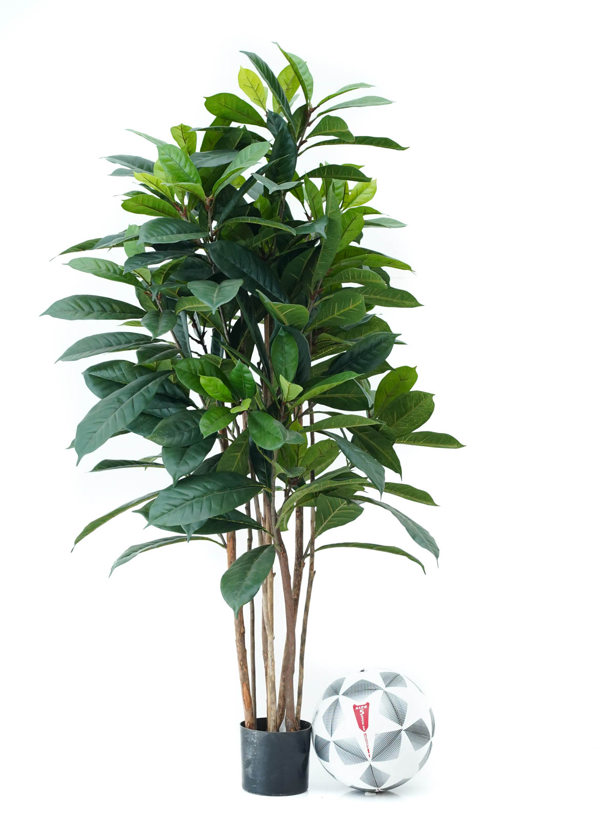Ficus Cyathistipula Tree (Med) Artificial Plants