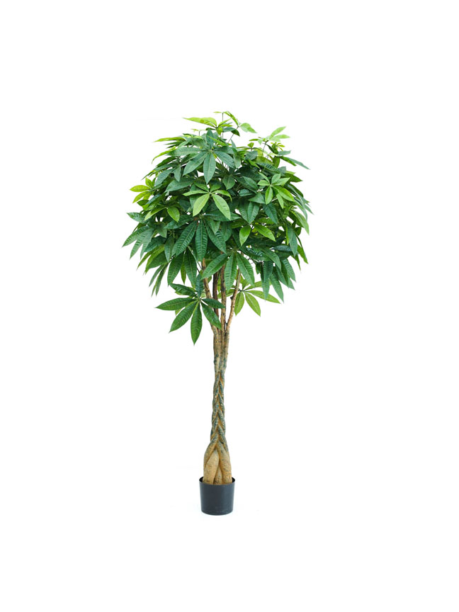 Pachira Braid Tree Medium Artificial Plants