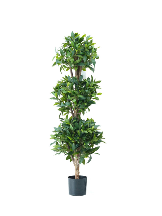 Sweet Bay Ball tree 4 (Med) Artificial Plants