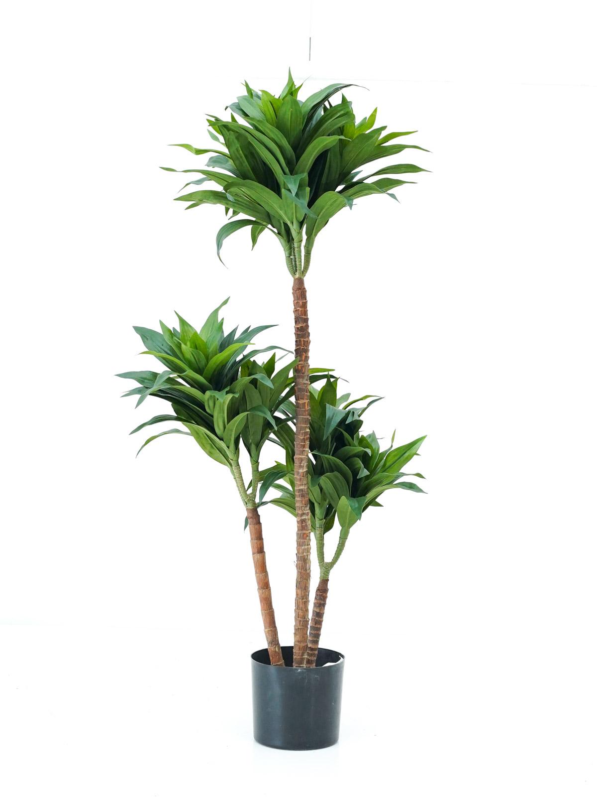 شجرة دراسينا فراجرانس - صغير 'نباتات اصطناعية'