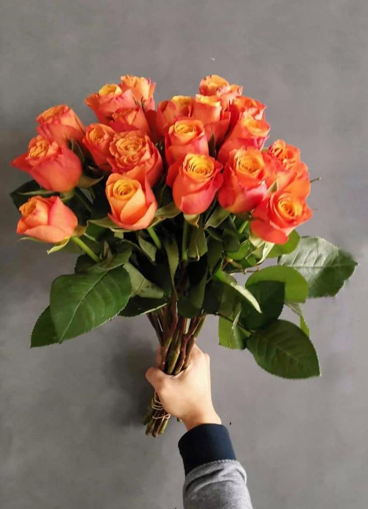 زهور برتقالي ' الزهور بالجملة'