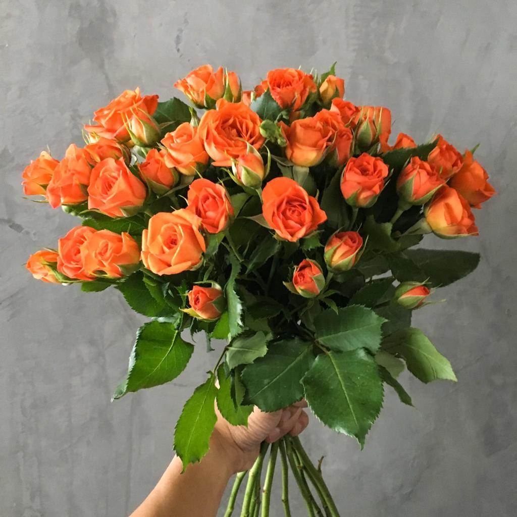 بيبي روز برتقالي ' الزهور بالجملة'