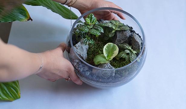 حوض زجاجي المفتوح - متوسط 'نباتات للمكاتب'