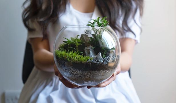 حوض زجاجي متوسط نباتات للمكاتب