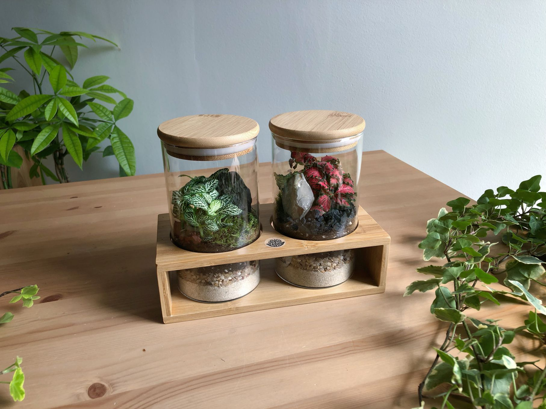 Salt & Pepper Office Plants