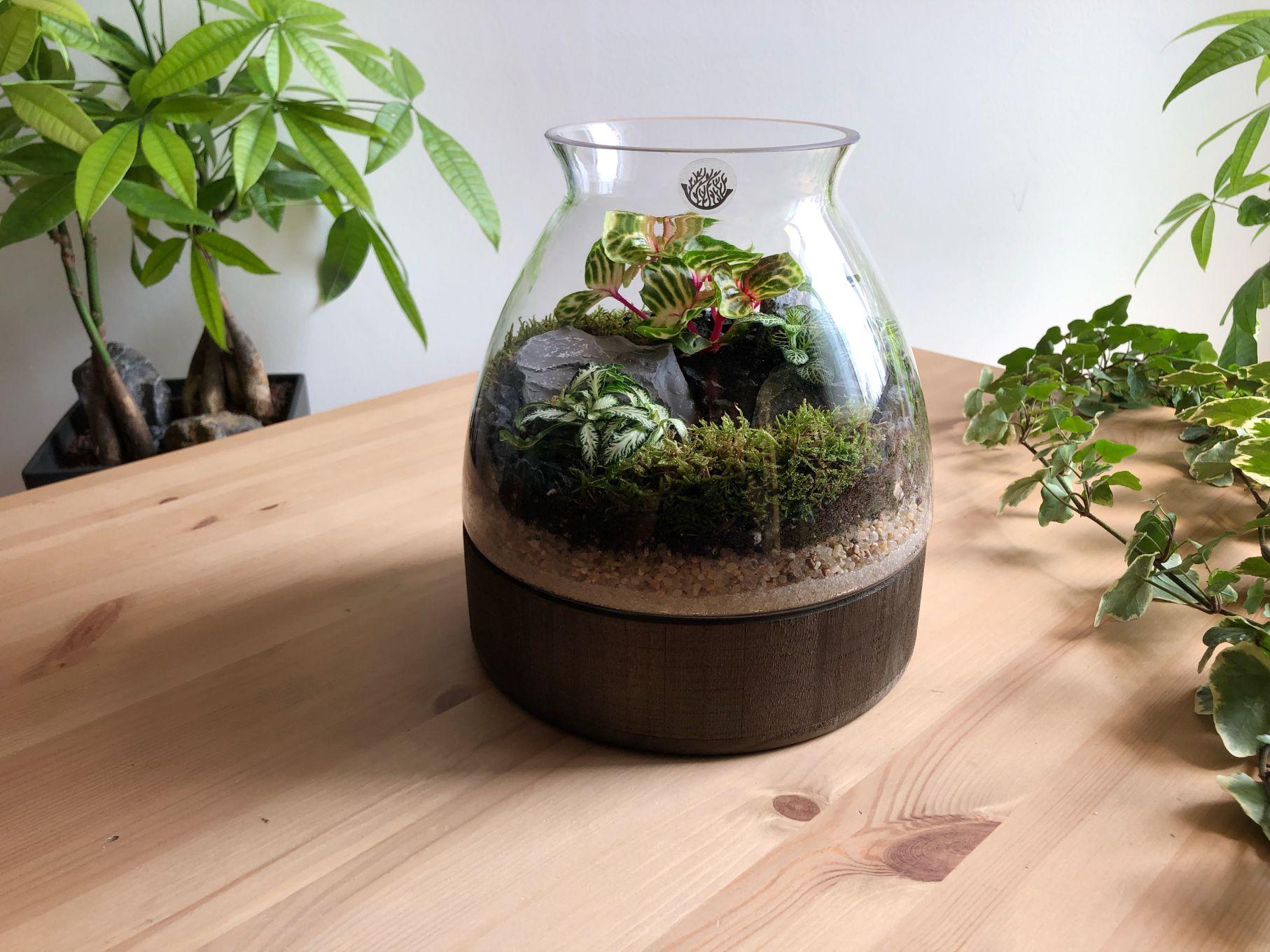 Wide Dark Wood Plate - Medium  Office Plants
