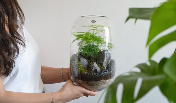 Capsule Terrarium Office Plants