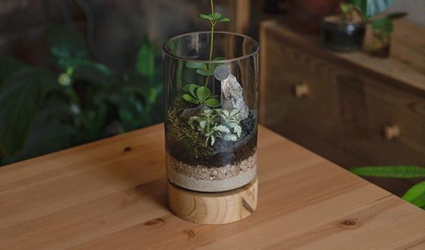 حوض الخشب الاسطواني 'نباتات للمكاتب'
