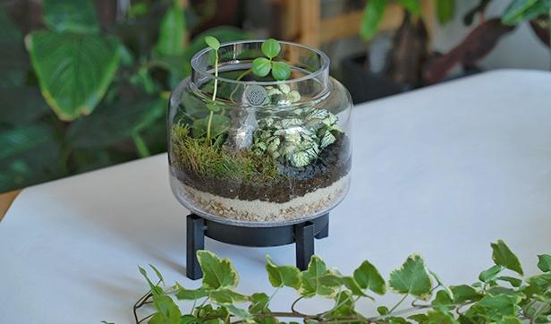 حوض بقاعدة معدنية نباتات للمكاتب