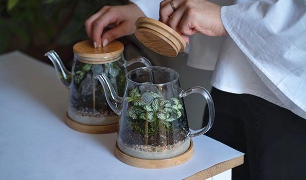 إبريق الشاي  (واحد) نباتات للمكاتب