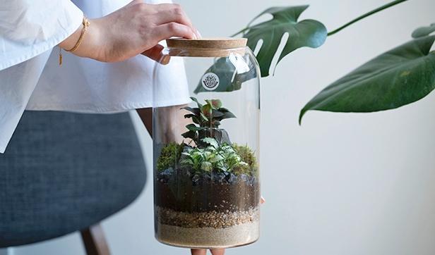 حوض الكبسولة المغلق  'نباتات للمكاتب'