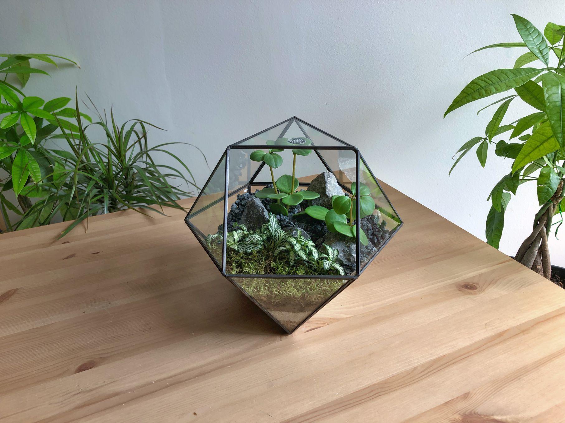 حوض زجاجي كروي مضلع أسود 'نباتات للمكاتب'