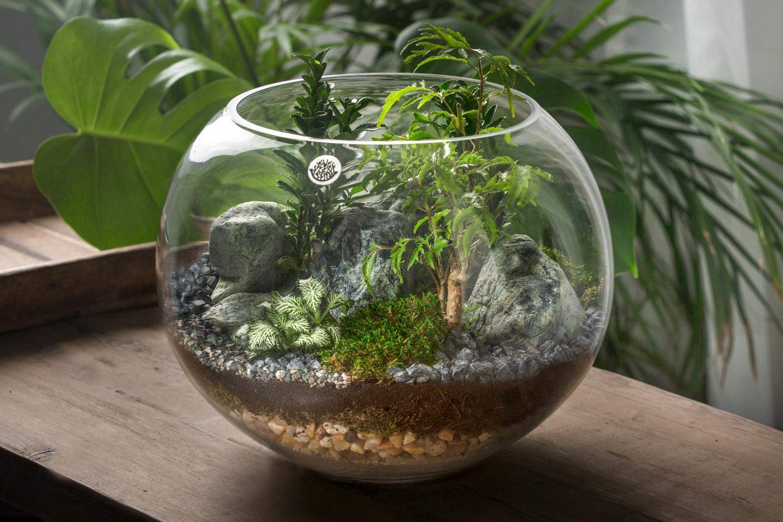 Classic Terrarium Office Plants