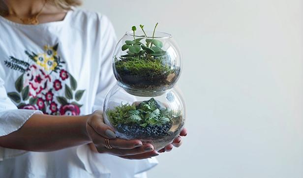 Small Double Bubble Terrarium Office Plants