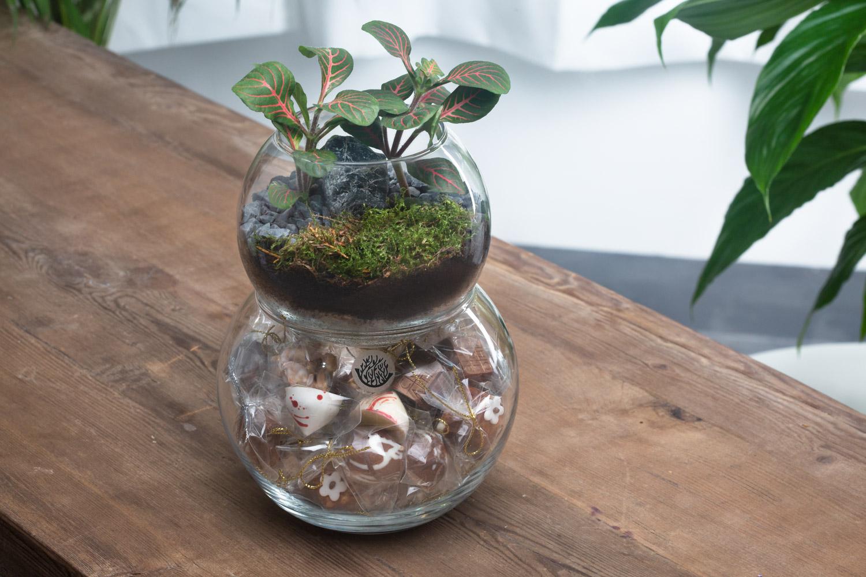 حوض زجاجي  مزدوج مع شوكولا نباتات للمكاتب