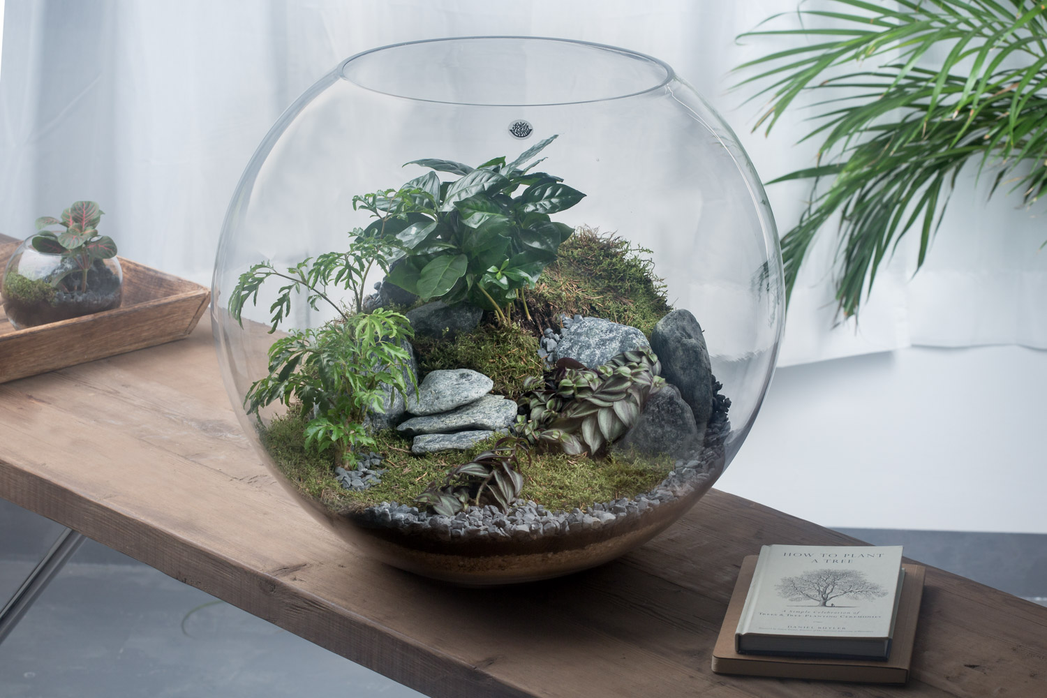 Sai Terrarium  'Office Plants'