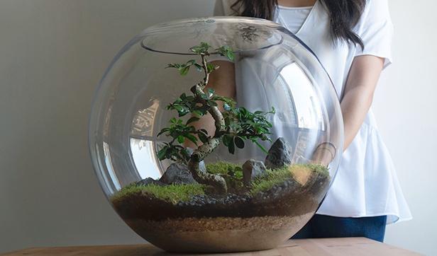 Bonsai Terrarium 'Office Plants'