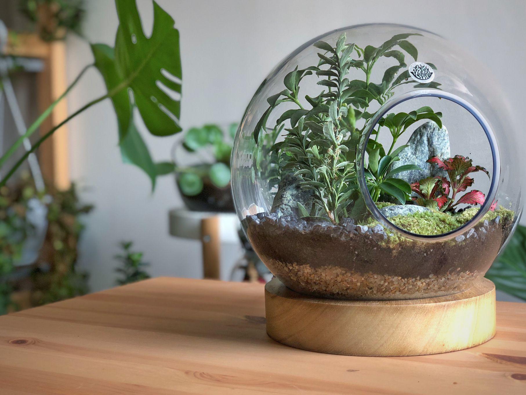 Light Wood Plate Terrarium  'Office Plants'