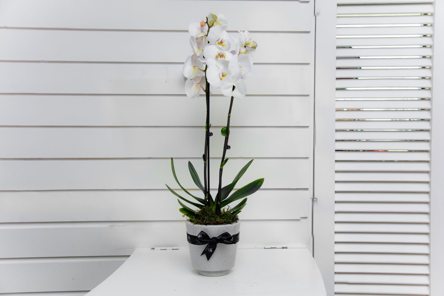 Jard orchid Flower with Base