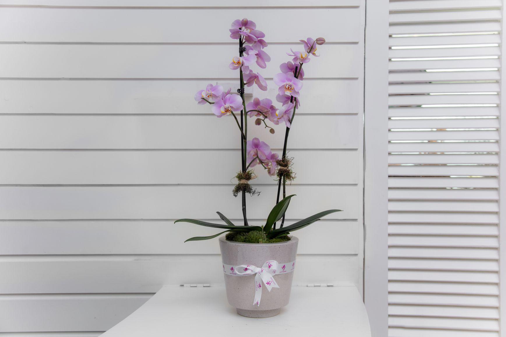 تورو 1 'زهور مع قاعدة'