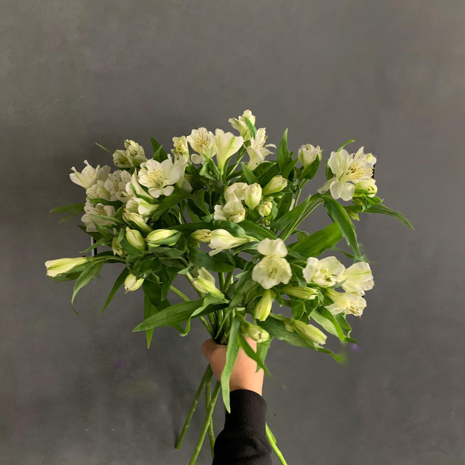 ألستروماريا أبيض ' الزهور بالجملة'