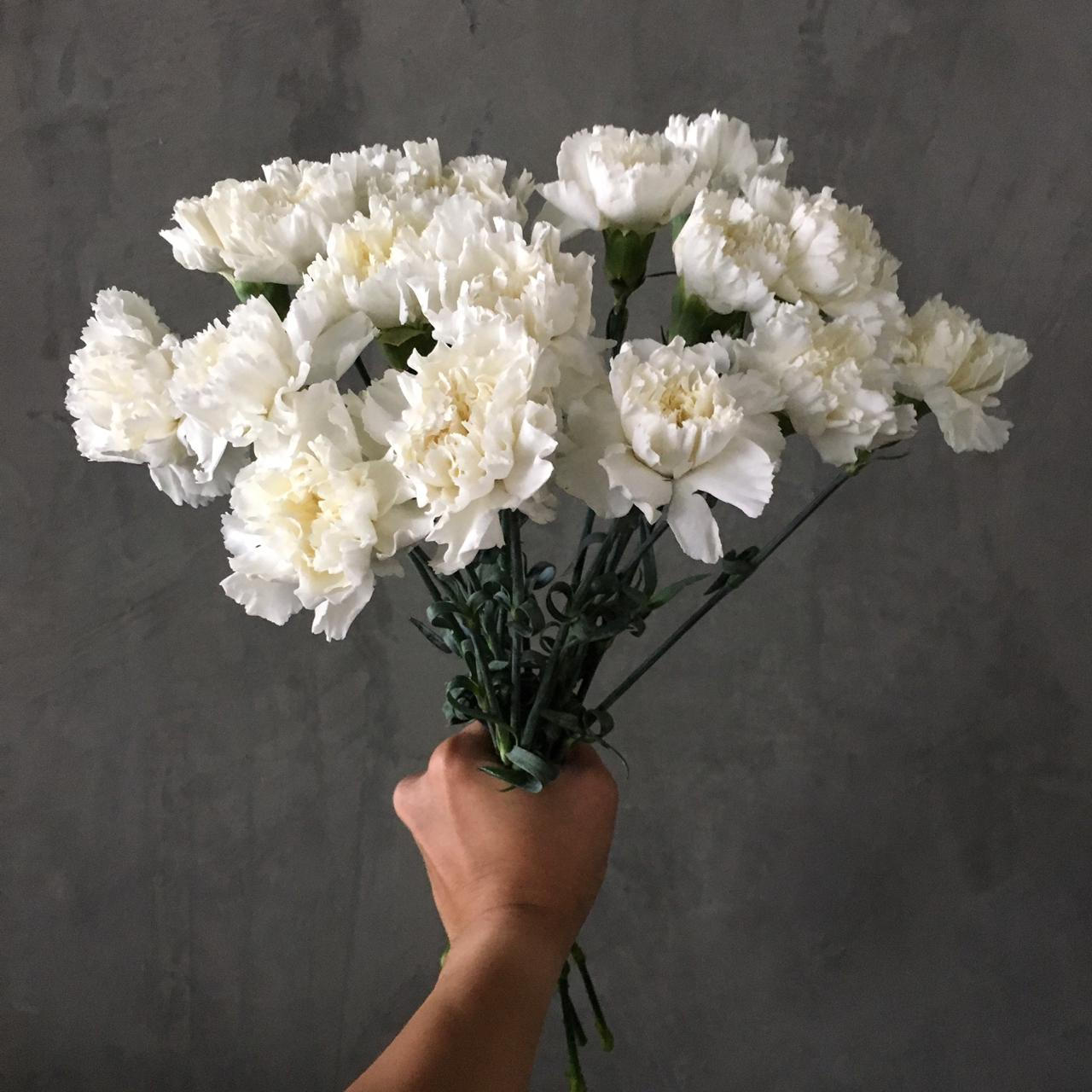 Carnation White 'Wholesale Flowers'