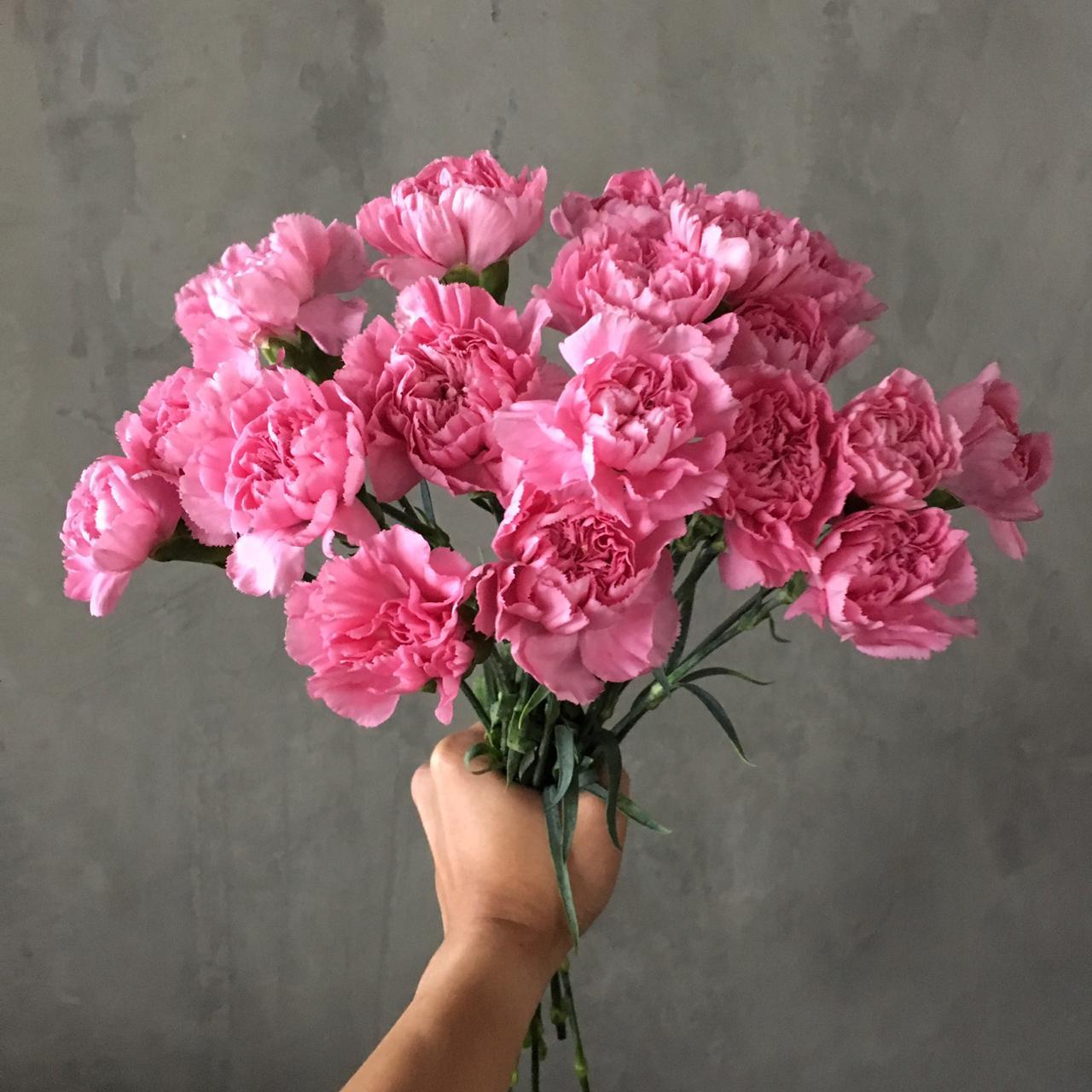 قرنفل وردي  الزهور بالجملة