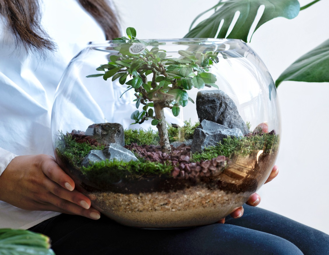 Classic Bonsai Terrarium Office Plants